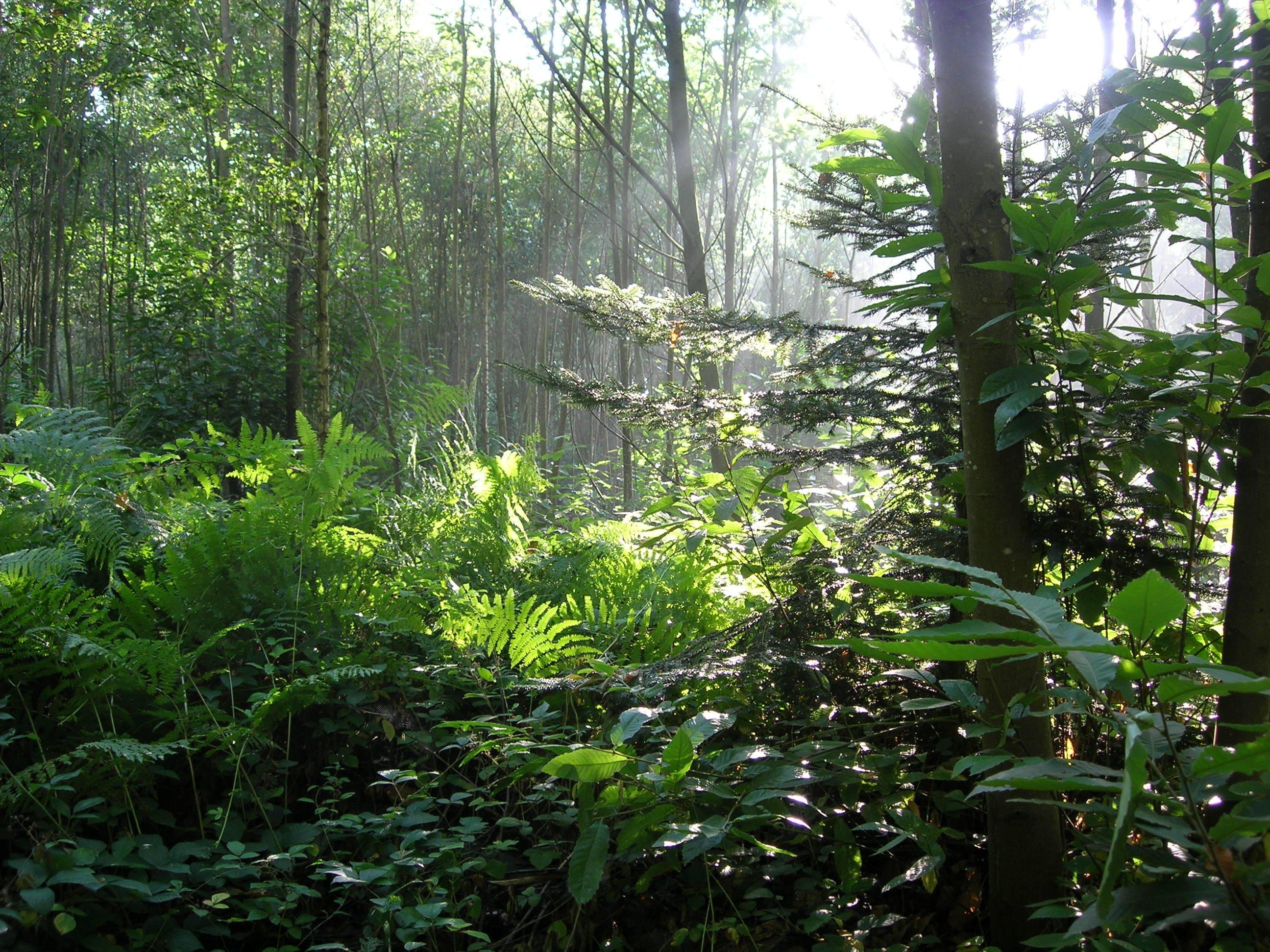 La Forêt et les 5 sens  // Centre Initiation Nature